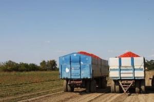 camion di pomodori